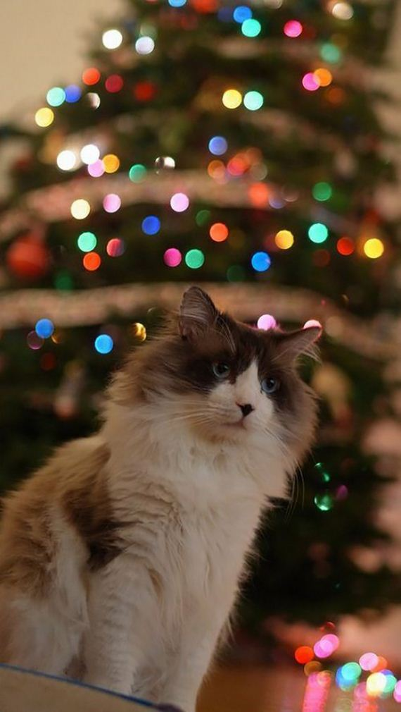 05-christmas-cats-013