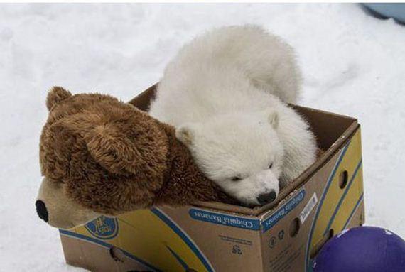 07-two_teddy_bears