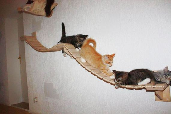 09-cat_playground_room