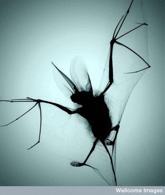 05-animal-x-ray