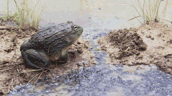 11-frog_01