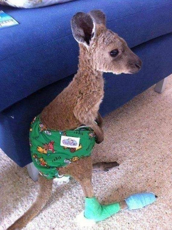 22-The-21-kangaroos