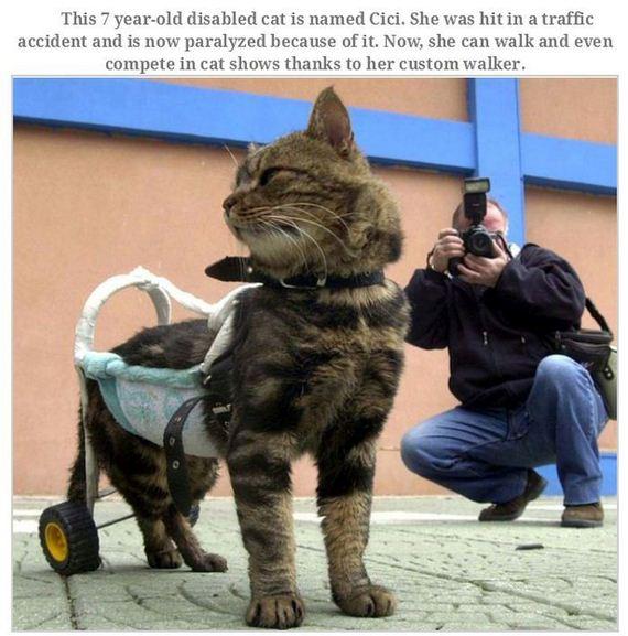 04-handicapped_animals