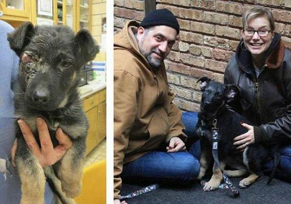 05-rescue_pets