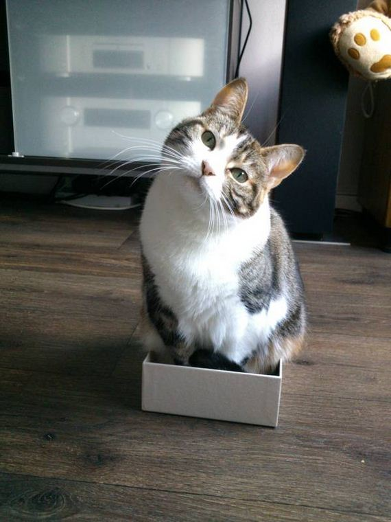 06-fits_i_sits_cats