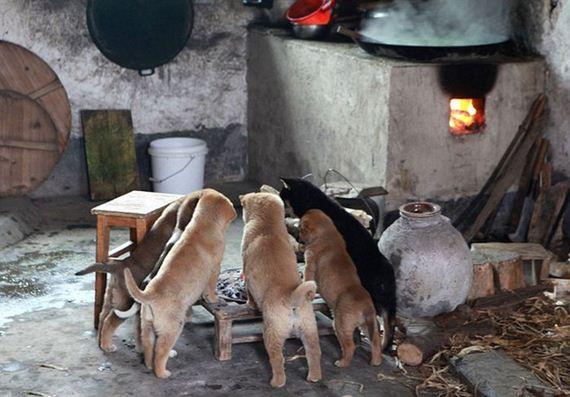 06-puppies_around_fire