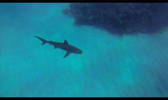 shark_attack_02