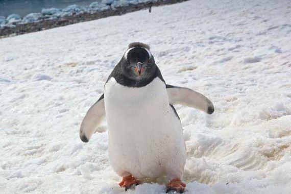 04-meet-the-neko-harbor-penguins