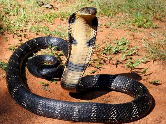 04-venomous-poisonous