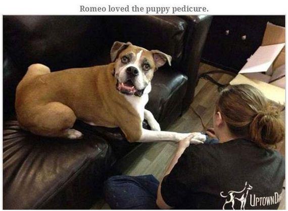 05-terminally_ill_dog_romeo