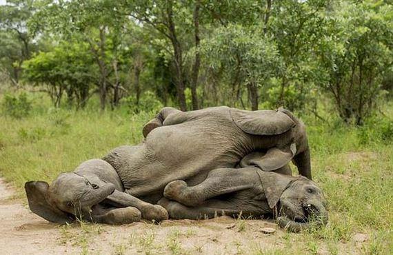 07-some-elephants-got-drunk