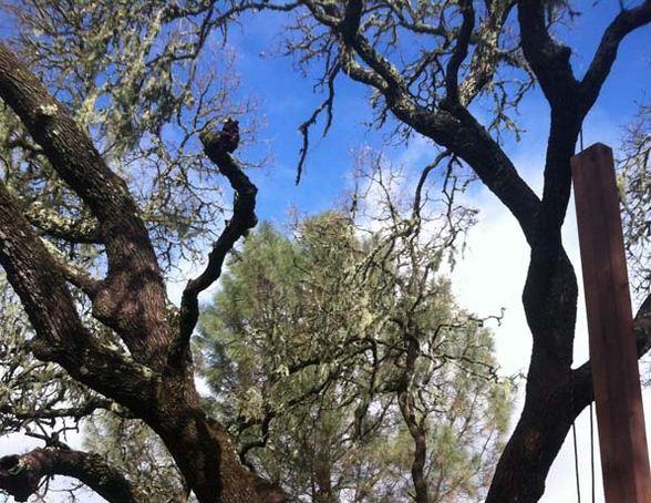 01-ordinary-tree