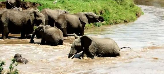 03-drowning-elephant