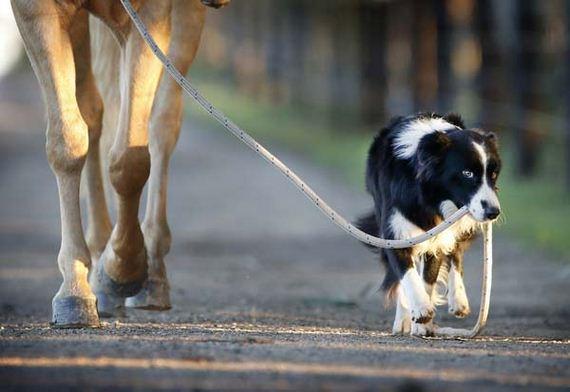 04-horseriding-dog