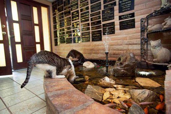 12-cat-sanctuary