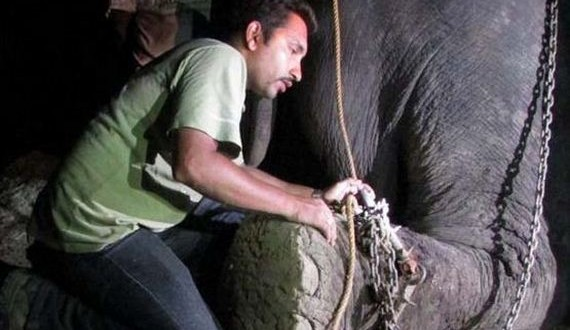 03-abused-elephant