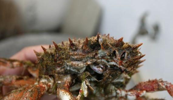 05-Crab-Shells