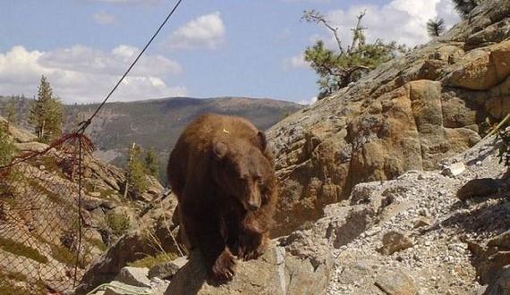 06-bear_rescue