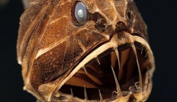 06-terrifying_ocean_creatures