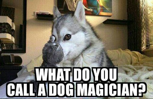 What Do You Call A Dog Magician Barnorama