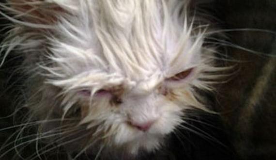 05-cat_rescue