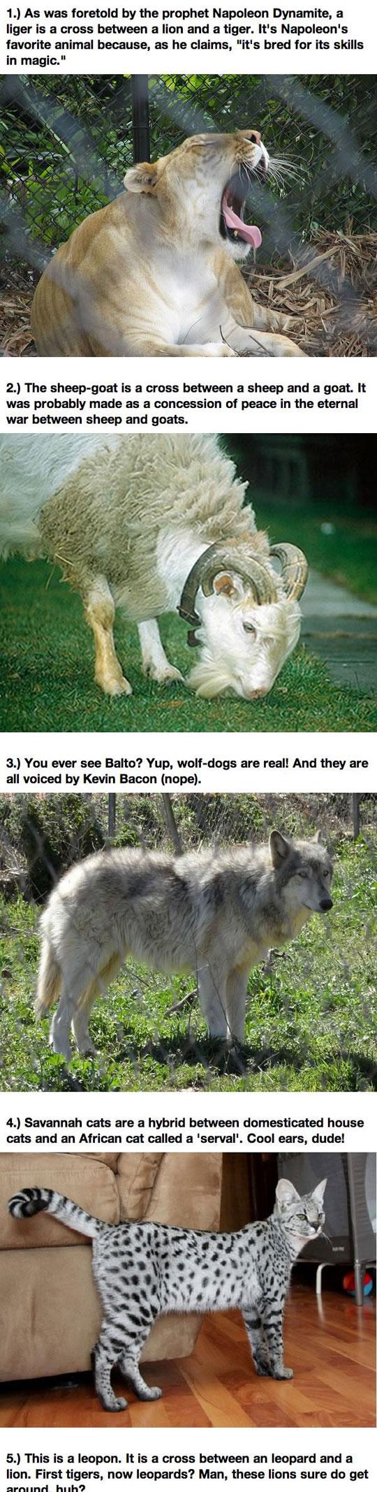12 Real Animal Hybrids...