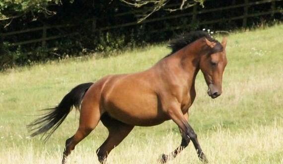 05-abandoned_horse