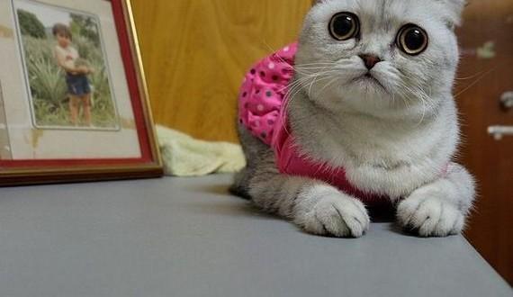 08-saddest_cat