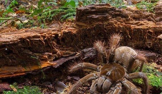 03-giant_spider