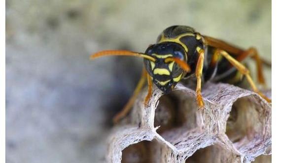 04-wasps_nest