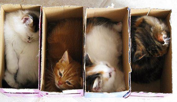 05-cats-will-definitely