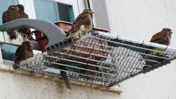 06-just_a_falcon