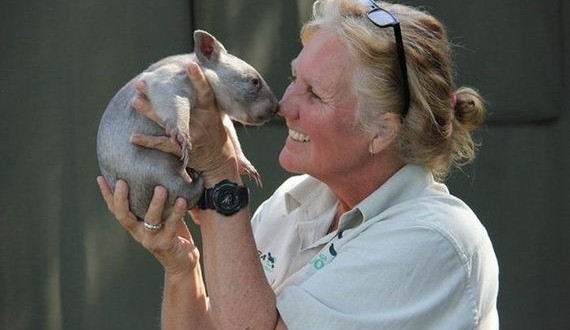 06-orphaned_wombat