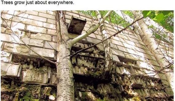 13-pripyats_new_nature