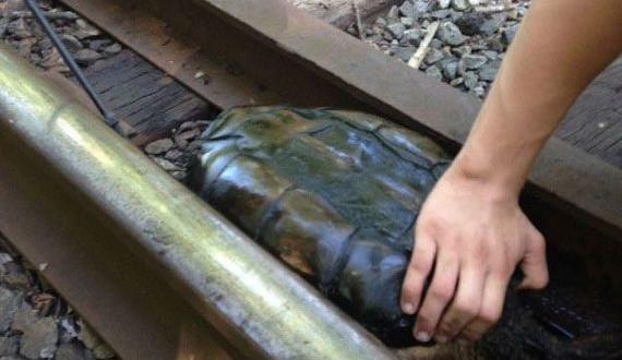 02-turtle_01