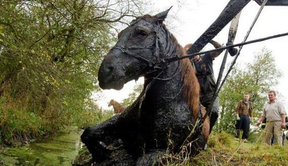 06-rescue_horse