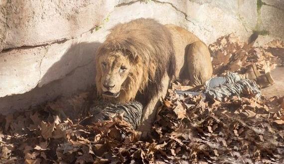 06-zoo