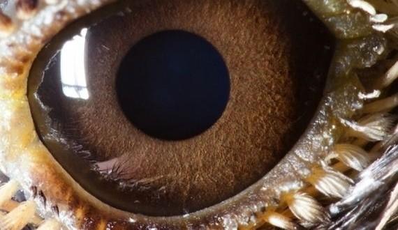 08-animal-eyes