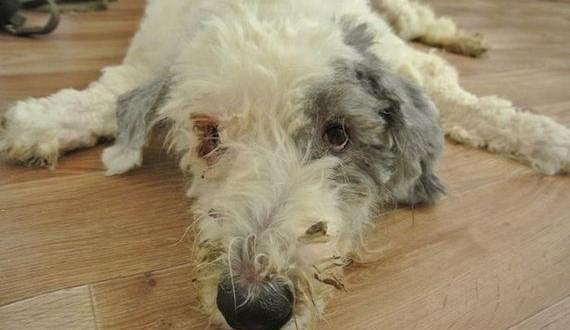 13-rescue_dog