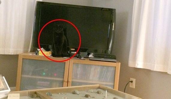 02-cat_hide