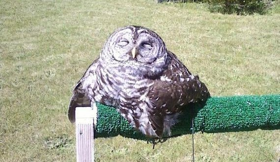 03-owl_01