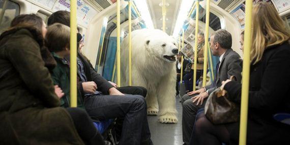 05-Polar-Bear-London