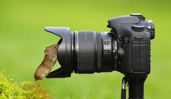 06-Animals-Camera-Gear