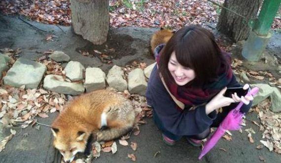06-fox-japan-village