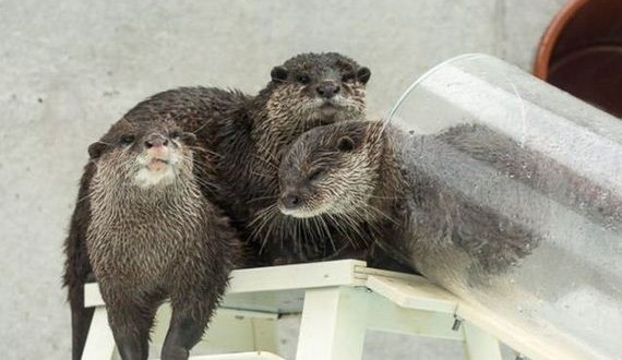 07-exhibit-japan-otter
