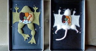 01-anatomy-dissection-knit