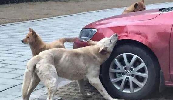 01-dog-driver-revenge