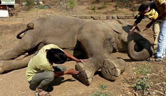 01-elephant-rescue