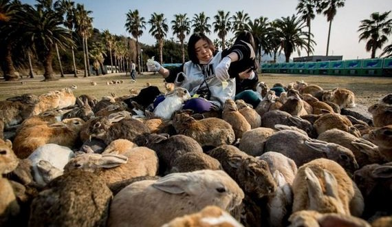 01-here-it-is-rabbit-heaven-in-japan-artnaz-com