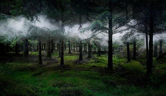 02-Artist-Spent-Forest
